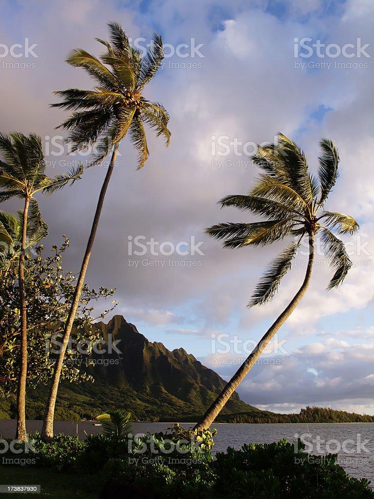 O'ahu East Shore Hawaii royalty-free stock photo