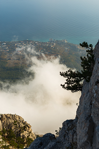 Ai-Petri Yalta Crimea November 29, 2020. View from the mountainside of the city, the sea and the cloud. Amazing autumn vertical landscape with pine trees growing on the slopes. Clouds are low