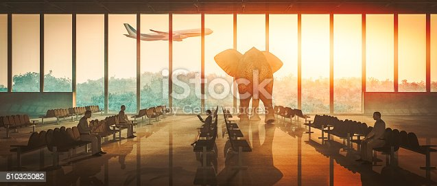 istock Aiport elephant watching airplane take off 510325082