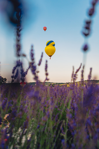 air balloon with basket above lavender field copy space