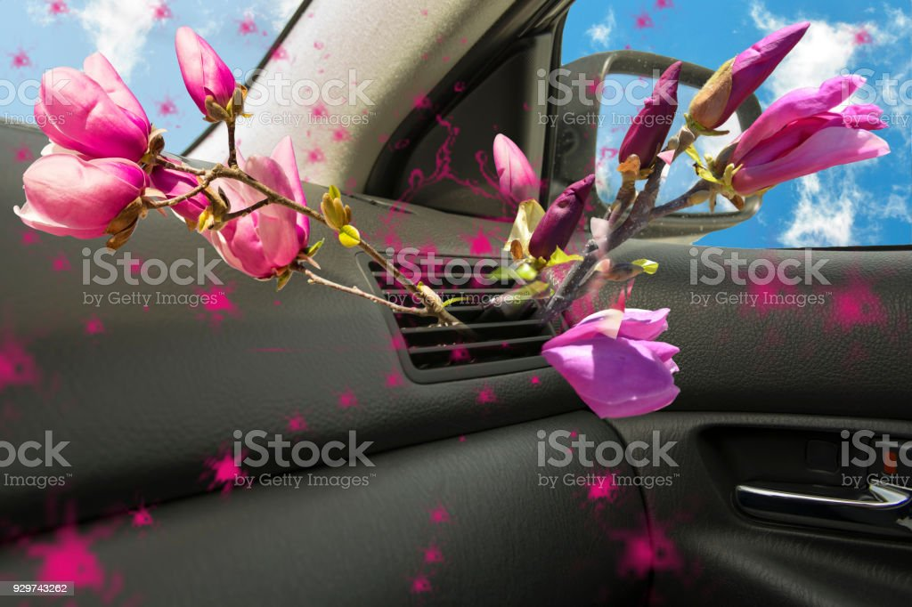 air conductors car magnolia flower aroma for background stock photo