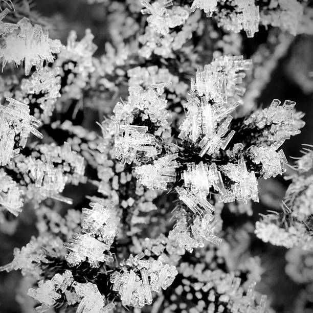 air hoar frost micrograph stock photo