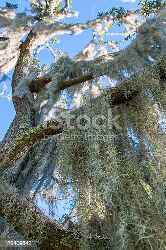 Air Plant Growing On Tree