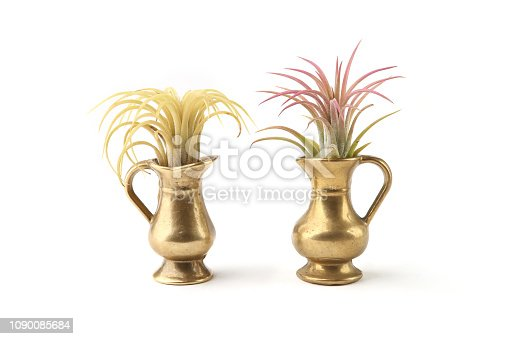 istock Air plant, Tillandsia ionantha, houseplant succulent in small jug isolated on white background. 1090085684