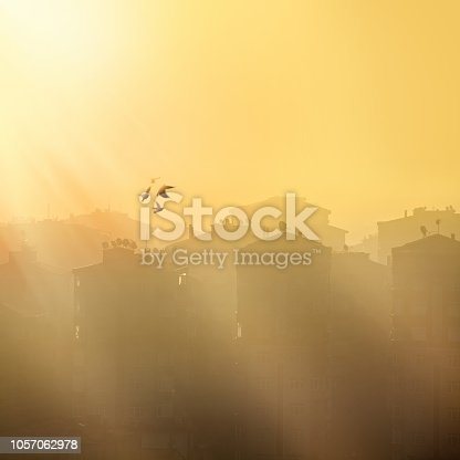 Environmental air pollution image of close up tall city buildings and flying birds in smoke at dusk time in Istanbul, Turkey