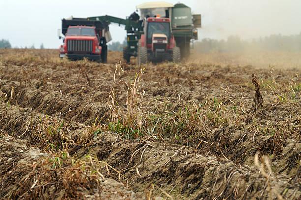 Air potato harvester stock photo