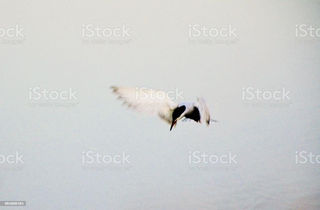 airborne royalty-free stock photo