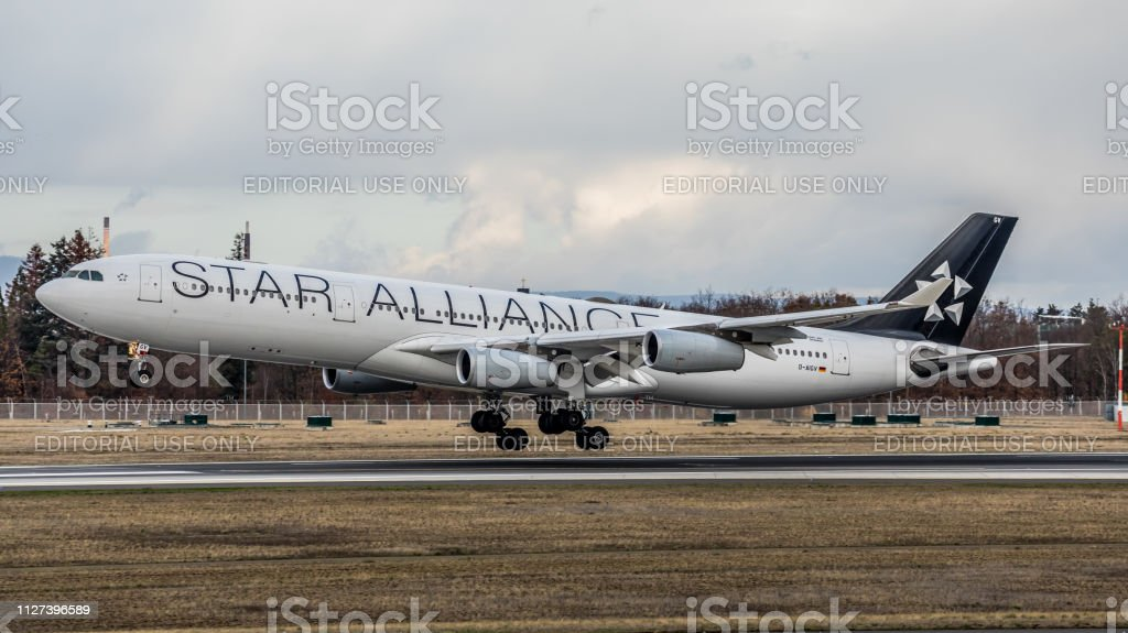 Airbus A340-313 X Lufthansa landet am Flughafen Frankfurt Am Main – Foto
