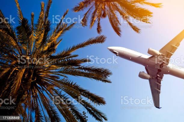 Airliner Sie Über Palmen Stockfoto und mehr Bilder von Flugzeug