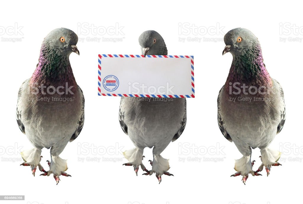 Airmail Pigeons stock photo
