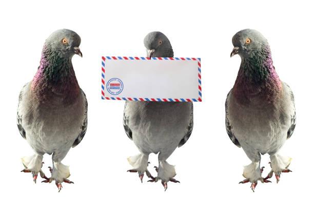 Luftpost Tauben – Foto