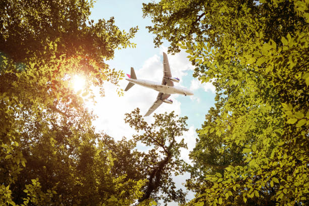 Airplane flying over trees stock photo