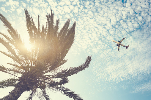 istock Airplane flying over tropical palm tree on cloudy sunset sky background. Summer and travel concept 1088657700