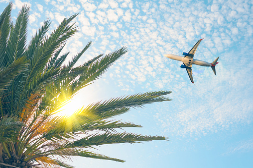 istock Airplane flying over tropical palm tree on cloudy sunset sky background. Summer and travel concept 1088659444