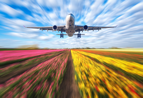 istock Airplane in motion. Landscape with passenger airplane is flying in blurred blue sky with clouds over the flowers field at sunset. Passenger airliner is landing. Commercial plane and blurred tulips 864965768