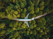Airplane in the forest