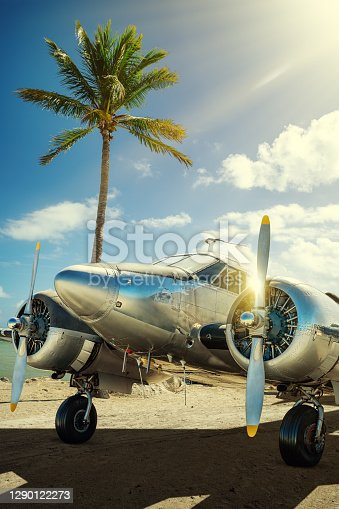 historical aircraft against a palm tree