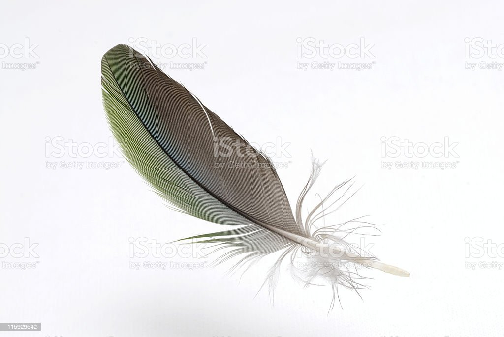 Airy levitate colorful feather royalty-free stock photo