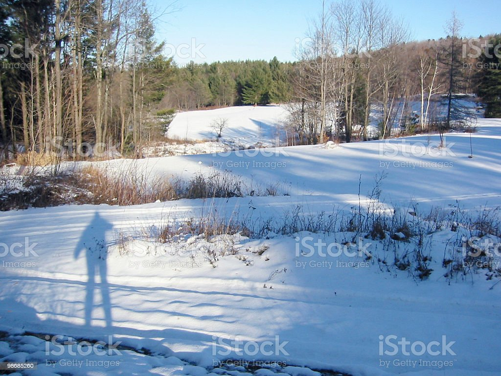 Airy Shadows Amongst Trees in a Wintry Field royalty-free stock photo