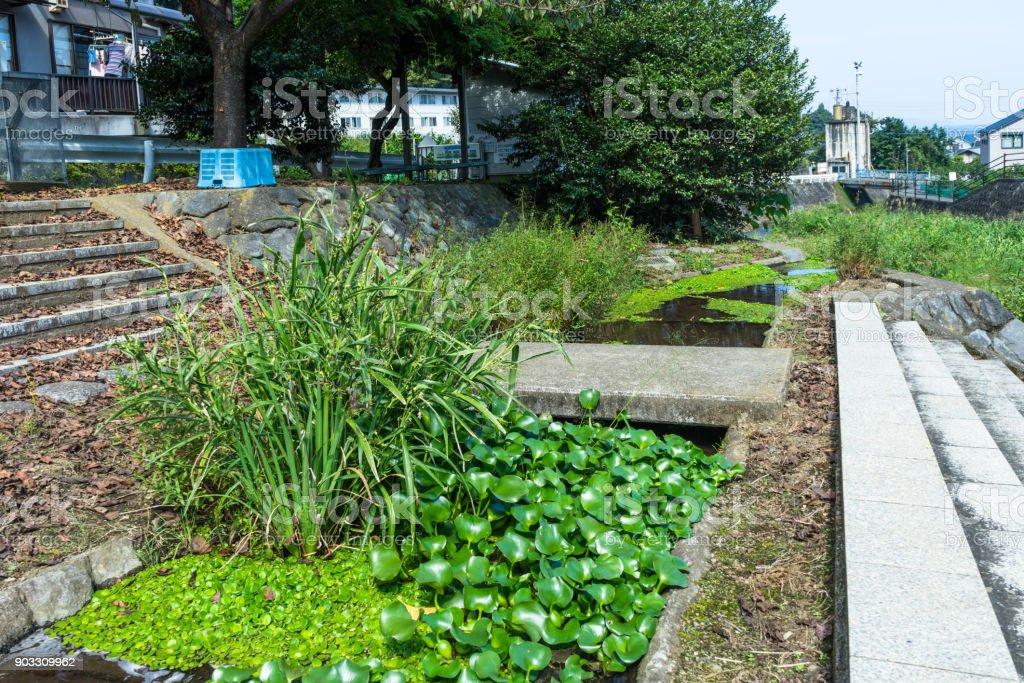 Ajiro river biotope stock photo