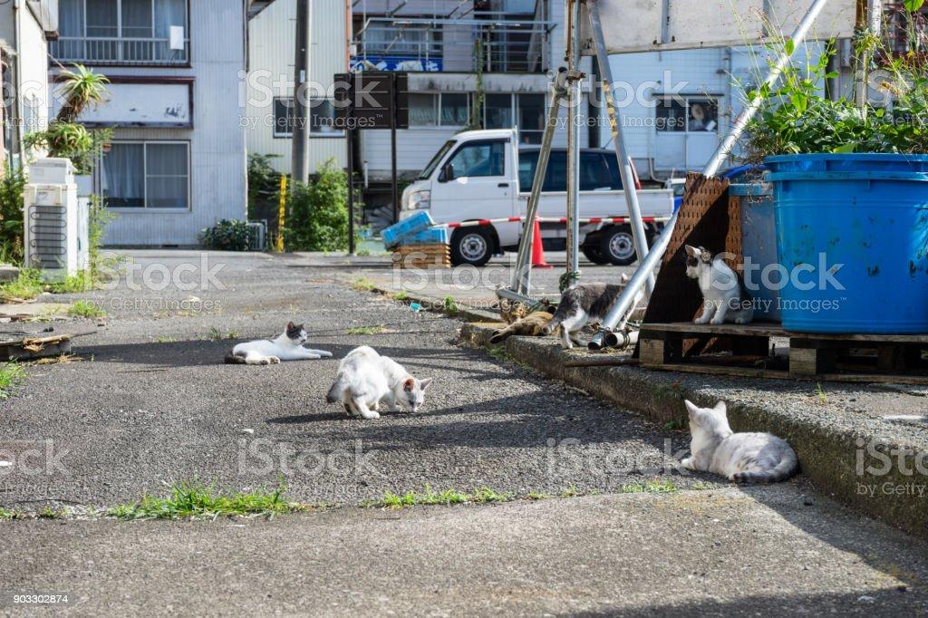 Ajiro's stray cats stock photo