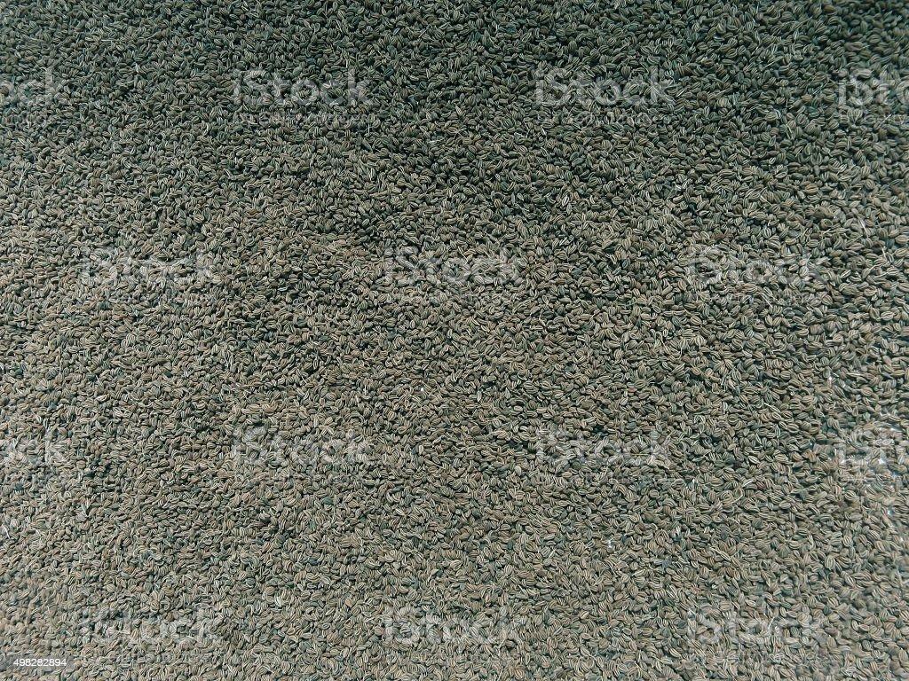 Ajowan, ajwain seeds, Trachyspermum ammi stock photo