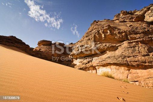 Big Desert sand dunes panorama with wild goat.Golden desert sand during sunset as background