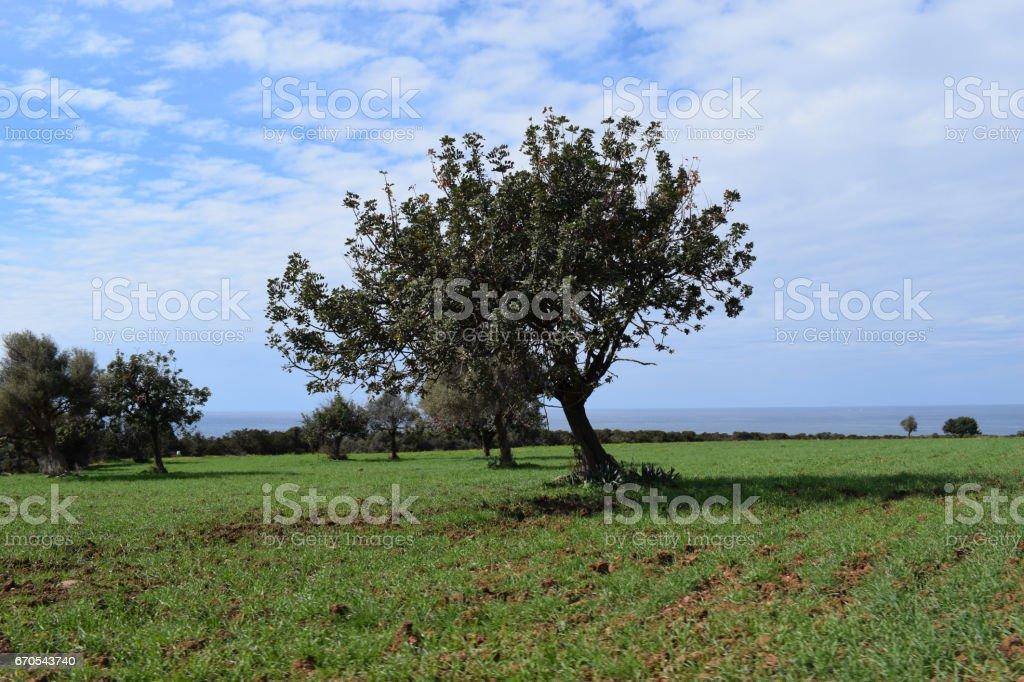 Akamas nature - Cyprus stock photo