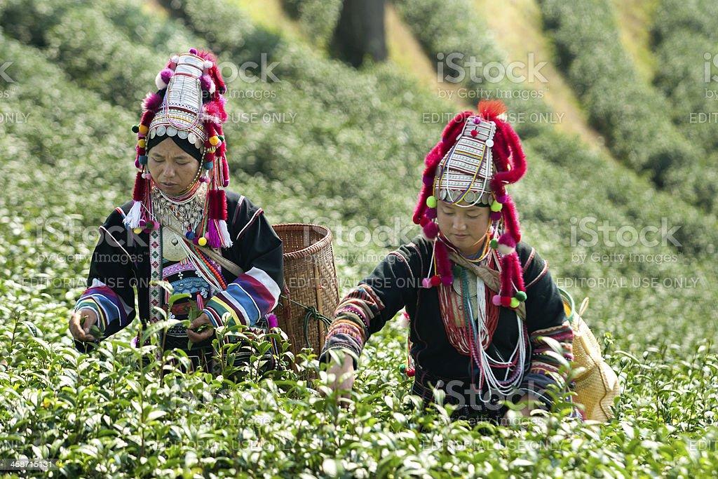 Akha Hill Tribe Women royalty-free stock photo