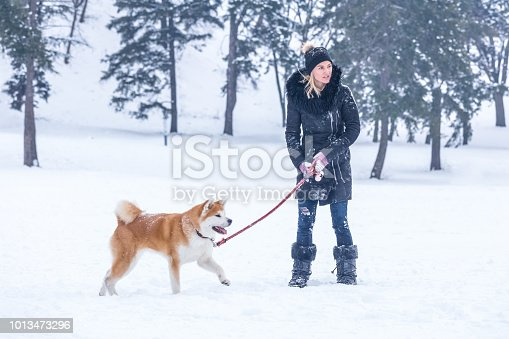 istock Akita dog walking with the owner on snowy day in the park. 1013473296