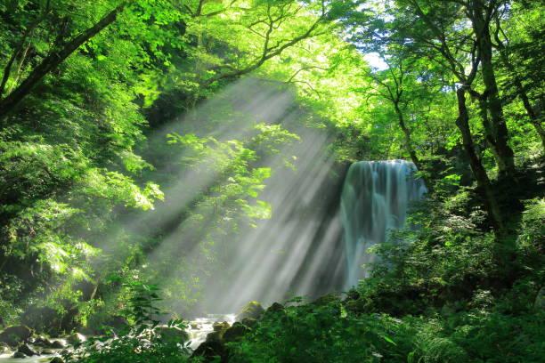 秋田県の夏の滝 - 自然 ストックフォトと画像