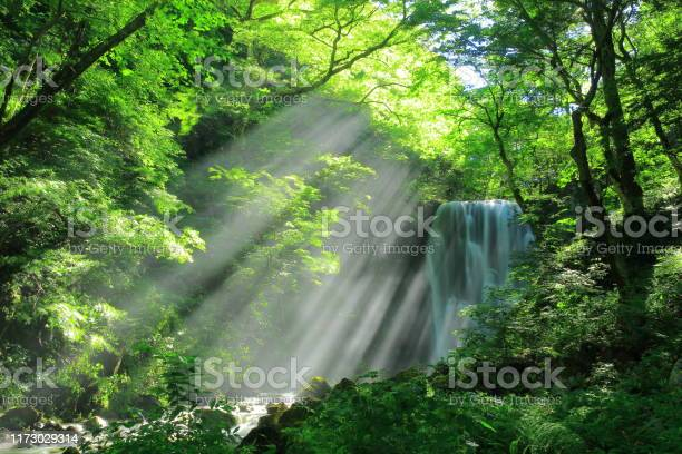 Photo of Akita Prefecture Summer Falls