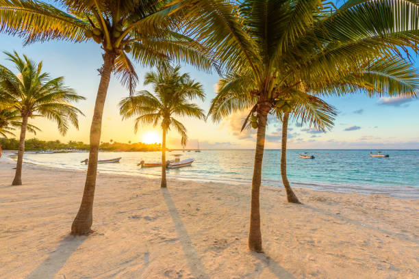 Akumal bay caribbean white beach in riviera maya coast of yucatan and picture id1158261448?b=1&k=6&m=1158261448&s=612x612&w=0&h=0itxgzv1 7cg l mtymdf2r6uxvukchsyci w2ads1o=