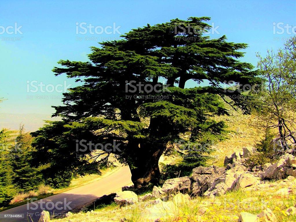 Al Shouf Cedar Nature Reserve, Lebanon stock photo