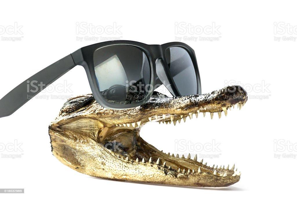 Al the Alligator stock photo
