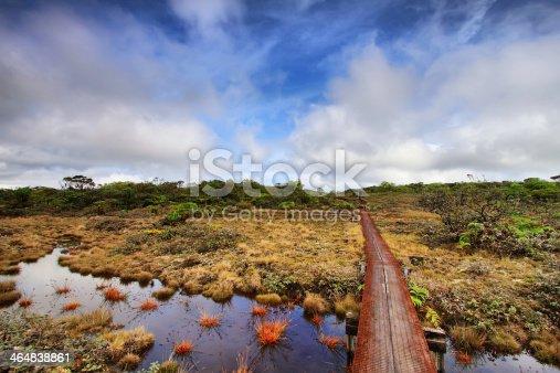 Alakai swamp trail in Kauai island, Hawaii