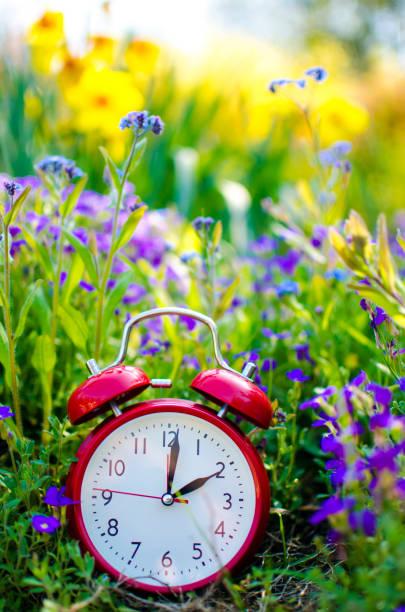 wecker im blumenbeet im frühjahr - blumenuhr stock-fotos und bilder