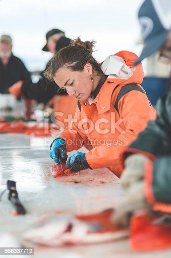 istock Alaska Fish Cleaning 866337712