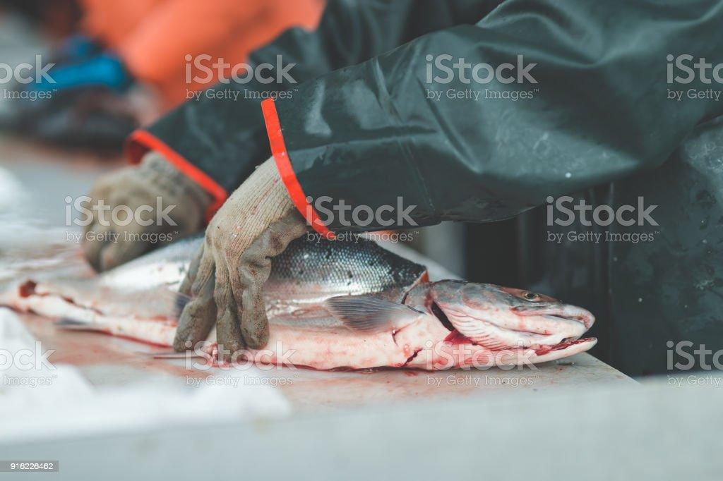Alaska Fish Cleaning stock photo