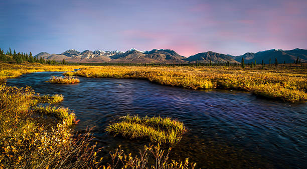 alaska - denali national park bildbanksfoton och bilder