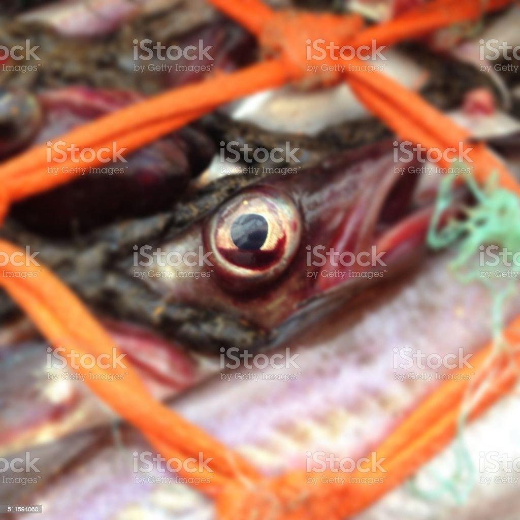 Alaska Pollock in a net stock photo