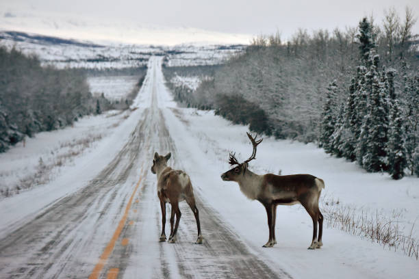 Alaska Roadblock stock photo