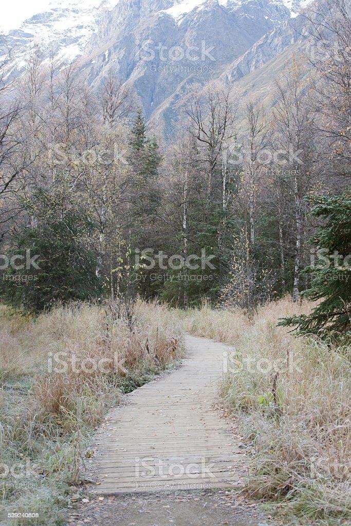 Alaska Wilderness Trail royalty-free stock photo