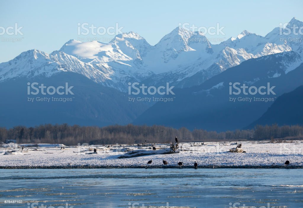 Alaskan Chilkat Bald Eagle Preserve in winter stock photo