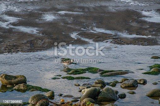 Alaskan beach on Homer spit called Bishop's beach.