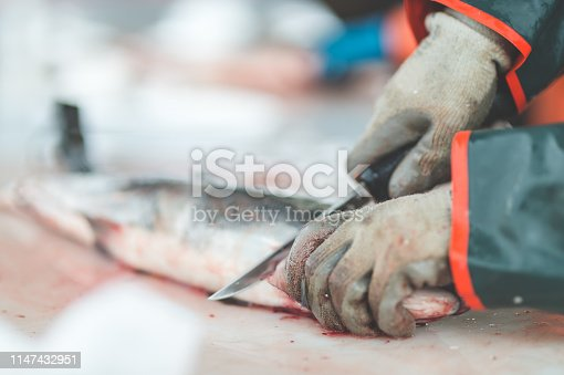 A male fish worker wearing gloves fillets a  fish in a warehouse. The shot is a close-up of the salmon and worker's gloved hands.