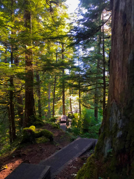 Alaskan Forest trail stairs stock photo