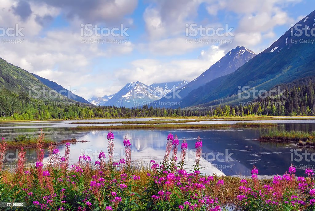Alaskan Horizons stock photo
