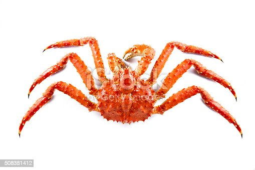 A big alaskan king crab isolated on white background.