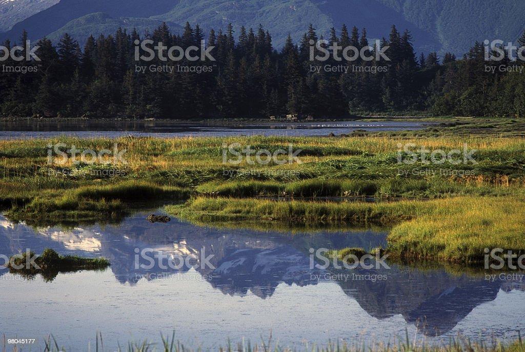 Alaskan Wetlands Reflection royalty-free stock photo